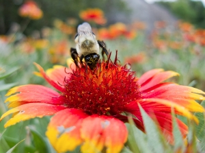 Bee Care and advise