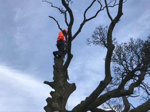 Tree Services in Leeds Area