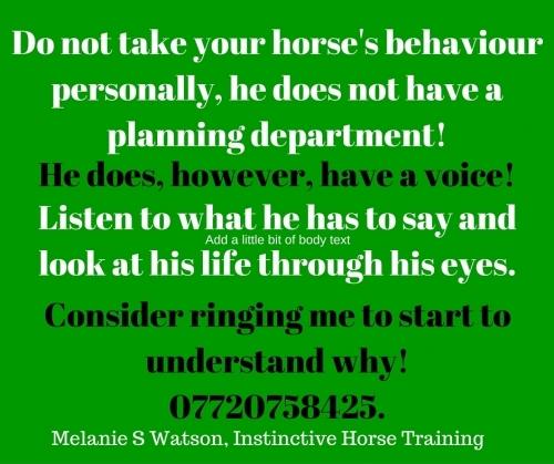 Main photo for Instinctive Horse Training