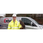 Whelan Pest Pevention Portsmouth