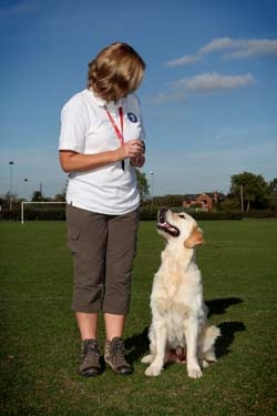 Clicker training is a wonderful method of rewarding positive behaviour from your dog