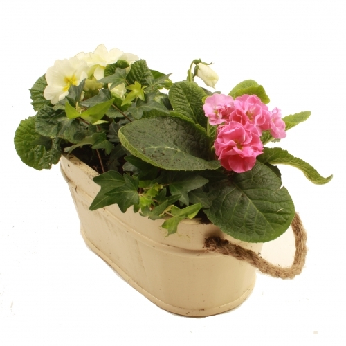 Planted baskets make long lasting gifts for Spring