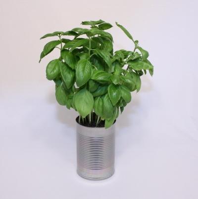 Tin can plant pot