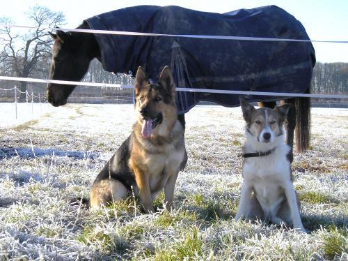 Cosford Dog Training Reviews