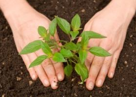 Read more about planting here