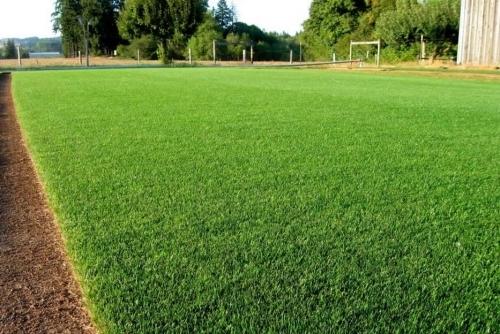 Field Of Turf
