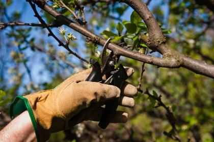 Gardeners Harrow Weald