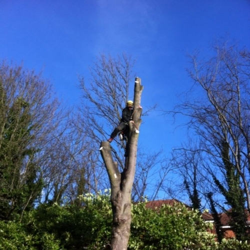Tree Surgery - Finchley, Barnet & across North London