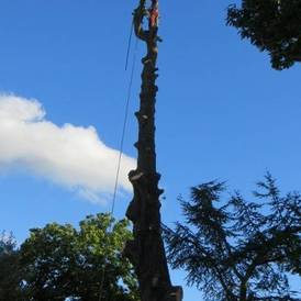 Tree surgeon Lutterworth