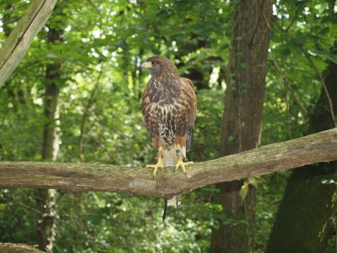 Main photo for New World Falconry