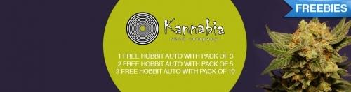 Kannabia cannabis seeds offer