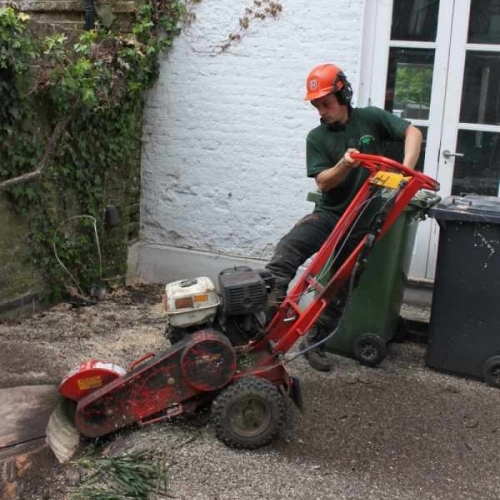 Stump Removal London