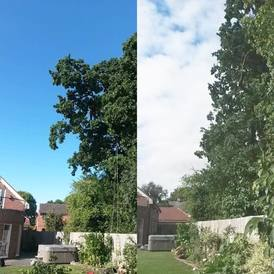 Tree Pruning Leicester