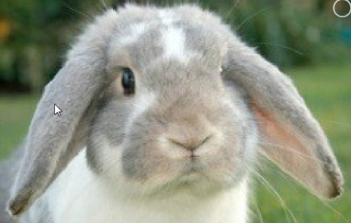 """One of our rabbit """"guests"""""""
