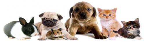 Main photo for Anwell Veterinary Centre