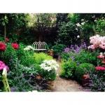 The Urban Gardeners