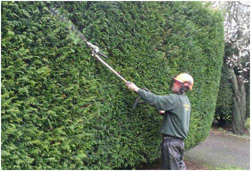 Hedge Cutting, Trimming, Removal