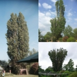 Chelmsford Tree Services Ltd