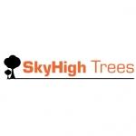 Sky High Trees