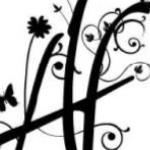 Acer Florist