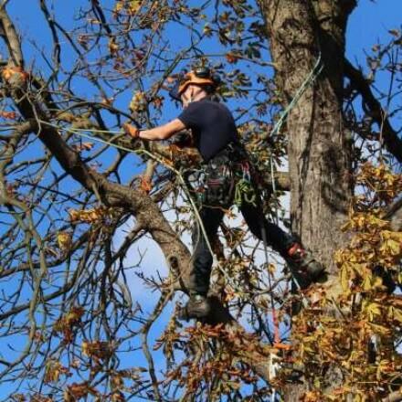 Tree Surgeon Specialists